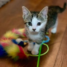My name is Chloe and I'm looking for my new home. Luckily for me SCARS was there to take me in. Second Chance Animal Rescue, Foster Mom, Little Princess, My Sister, Cuddle, Cats And Kittens, Gem, Chloe, Adoption