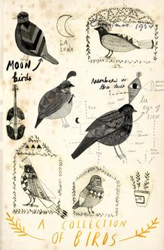 Collection of birds - Katt Frank