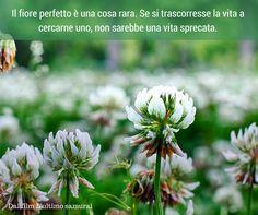Quote by Dal film L'ultimo Samurai #quotes #quote #aforismi #nature #natura #flowers #citazioni #naturequotes #L'ultimo #Samurai #L'ultimosamurai