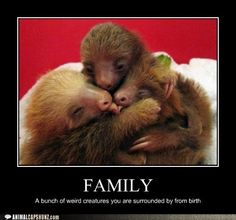 "This is an animal family hugging. If the human family is hugging, it could be pictures of different animal families hugging. I think the communication works because there is similarities between the animals and humans. People can identify themselves in the animal families and say ""look these animals, they are like us""."
