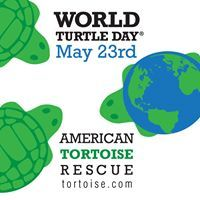 World Turtle Day is May 23rd each year & is celebrated throughout the world. It was started in 2000 by American Tortoise Rescue. Join us to shellebrate turtles & tortoises!Log on http://www.worldturtleday.org/online-store