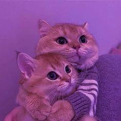 Cute Kawaii Animals, Cute Little Animals, Cute Funny Animals, Funny Cats, Baby Animals Pictures, Cute Animal Photos, Cute Pictures, Cute Baby Cats, Kittens Cutest