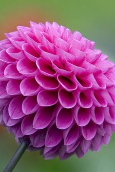 My favorite flower ever... Love dahlias... Especially beautiful in a Saturday morning farmers market bouquet