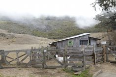 Slide Ranch! goat barn Marin California