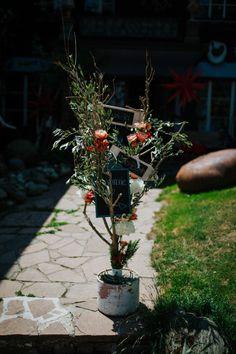 Hochzeitsfotograf Kärnten Plants, Pictures, Flora, Plant, Planting