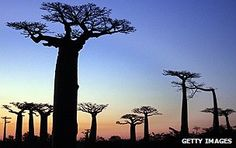 BBC News - Madagascar country profile - Overview