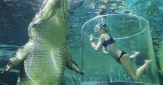 Lặn cùng cá sấu trong chiếc lồng tử thần