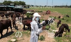 Uncanny Terrain: The Documentary About the Devastation of Fukushima and Japanese Farming » The Spread
