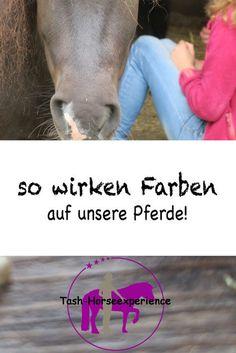 Farben und ihre Wirkung auf unsere Pferde, Pferdeverhalten, Energetik Pferde