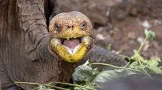 Diego salvó a su toda su especie de tortugas gigantes (AFP)
