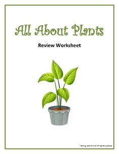 Worksheet Template : Answers To The Energy And Photosynthesis ...