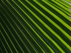 patterns in nature 1