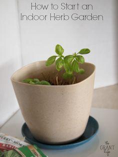 how to start an indoor herb garden hint its super easy herbs - How To Start An Indoor Herb Garden