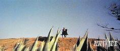 Lo quiero muerto (Título original: Lo voglio morto) Año: 1968 Director: Paolo Bianchini Actor principal: Craig Hill