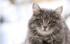 Evde hazırlanabilir kedi ve köpek mamaları sayesinde yaşadığınız çevredeki minik dostlara kış günlerinde yardım etmek istersiniz diye...
