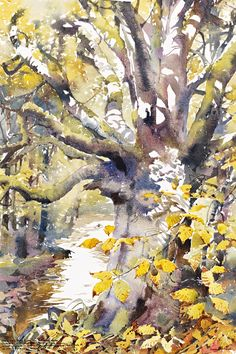 Darren Woodhead, Artist