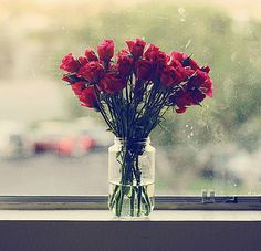 #red #roses are perfect for a spot by the window