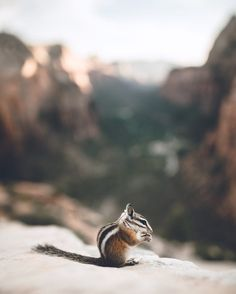 He literally went in my backpack and took a berry, but posed for me afterwards by Zach Allia on 500px