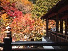 南蔵院Nanzoin, Sasaguri, in Fukuoka 20014 Japanese Gardens, Yamaguchi, Fukuoka, Garden S, Cabin, Explore, House Styles, Image, Beautiful