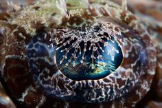 the Eye by Jonathan Lin  #photography #underwater #fish