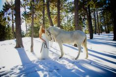 senior girl with horse in snow, senior and horse, backlit, fairy tale, shadows on snow, white horse, white prom dress, girls best friend | Criativo Photography