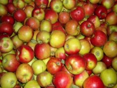 This is the Jonah Gold apple it is the most commonly used apple in Magyar cooking.
