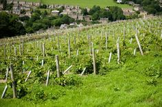 Take a tour of Holmfirth Vineyard - or simply just relax with a coffee and take in the scenery?