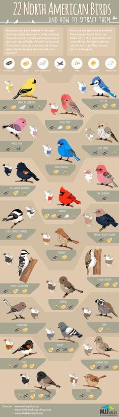 Birds of America Infographic