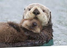 Sea Otter Mom & Pup