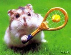 hamster_tennis-12439
