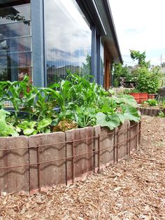 How concrete roof tiles have been used to make raised garden beds. Mulched infiltration basins around the beds store rainwater which wicks up into the beds.