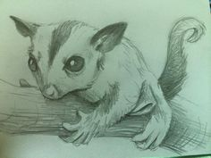 Day 44: Drawing A Day Challenge. Animal theme month. Sugar Glider