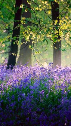 Trees & bluebells in spring's sunshine & shade by Veluchamy Thangavel All Nature, Amazing Nature, Beautiful World, Beautiful Places, Beautiful Forest, Magical Forest, Simply Beautiful, Landscape Photography, Nature Photography