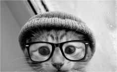 Hipster kitty! Lily needs this outfit
