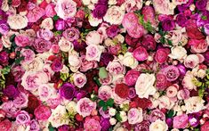 Kate Spade Roses | Live Colorfully Everywhere with Kate Spade's Blog | Katalin Rae