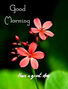 Good Morning Friends Images, Good Morning Flowers Pictures, Good Morning Beautiful Pictures, Good Night Flowers, Good Morning Happy Sunday, Good Morning Roses, Good Morning Image Quotes, Good Morning Beautiful Images, Good Morning Cards