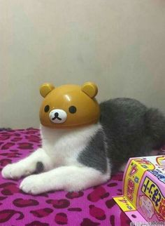 Остерегайтесь медведь-кота