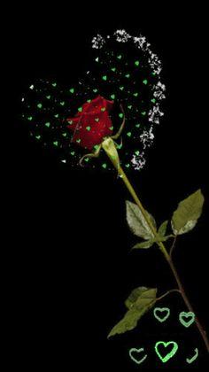 Love Wallpapers Romantic, Beautiful Flowers Wallpapers, Beautiful Nature Wallpaper, Roses Gif, Flowers Gif, Love Heart Images, Love You Images, Beautiful Love Pictures, Beautiful Gif
