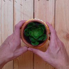 Shared by caixotedosmilagres #homedesign #contratahotel (o) http://ift.tt/1p6GUcv vasinhos MALU são feitos com muito carinho para abraçar suas plantinhas. Espie nossa lojinha (link na bio). #vaso #vasos #vasospersonalizados #plantas #planta #suculentas #jardim #jardinagem #decoracao #decorations  #homedecor #feitoamao #handmade