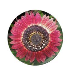 Crimson Sunflower Dinner Plates
