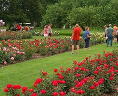 The Rose Garden boasts of beautiful colors and fragrance.