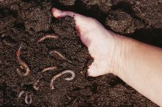 4 Easy Soil Tests You Can Perform Yourself