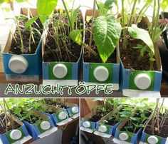 Aussaattöpfe Tetrapak – preiswert und wasserdicht Sowing pots are a hot topic especially in spring and if you want to grow numerous young plants, you [. Organic Gardening, Gardening Tips, Balcony Gardening, Vegetable Gardening, Indoor Greenhouse, Diy Herb Garden, Weed Seeds, Herbs Indoors, Plantar