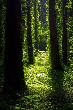Essence of Nature