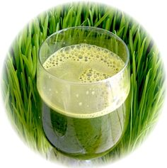 wheatgrass, nicknamed liquid gold for a good reason.  It's easy to grow, high chlorophyll content, known to improve digestion.  #juicing #healthyliving #wheatgrass