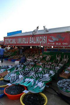 Cat & Fish - Kumkapi Fish Market by shamsters, via Flickr