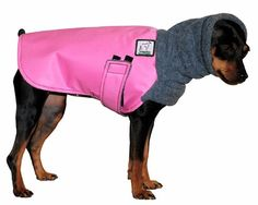 MINIATURE PINSCHER Winter Dog Coat -- WANTS