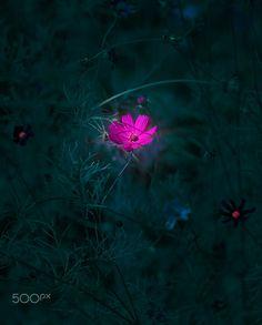 Pink Flower by Mevludin Sejmenovic on 500px