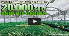 New Whole Foods Market features 20,000 square foot Rooftop Farm