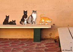 Miami Street Cats - Miami, Arizona, USA